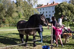 Denise Karlsson, 5 år, från Bollnäs sträcker sig för att klappa hästen av rasen Nordsvensk brukshäst.