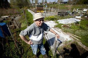 Här i grönområdet mellan Prästjorden och Brännavägen vill kommunen öppna upp möjligheten att bygga bostäder. Men Gösta Finnäs, 79 år, som nu riskerar att förlora sin kolonilott tycker inte om planerna.