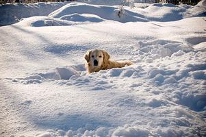 Min syster var ute och fotade våran hund Castor i vintersolen!