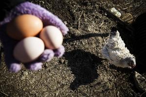 – Äggen håller sig bättre och längre om man inte tvättar dem, berättar Jenny Henriksson.
