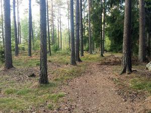 Höst i Finnslättens skogar. Camilla Danielsson
