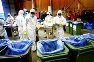 VETERAN. Med gula handskar, vita skyddskläder och munskydd letar Sebastian Brink igenom soporna. Det är tredje året han är med.SOPOR GRANSKAS. Närmare tre ton sopor granskas, analysera och sorteras. Hur duktiga Gävleborna är på att sortera kommer att redovisas om ett par veckor.