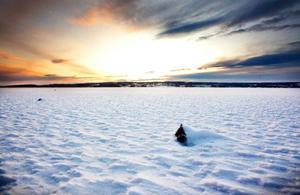 Storsjön lade sig lagom till den 18 december, vilket är kring det medeldatum då isen brukar frysa om man tittar tillbaka i statistiken. Men än ska man vara försiktig att ge sig ut på isen, det varnade räddningstjänsten för senast häromdagen efter den tragiska drunkningsolyckan i Locknesjön.