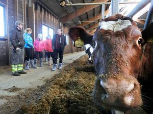Kan EU hjälpa oss att få bättre betalt för mjölken? Frågan var aktuell när EU-parlamentarikern Jens Nilsson besökte mjölkleverantören Lennart Karlsson som har 120 kor i Bölåsen.