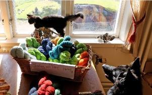 Husdjuren trivs bland garnhärvor och ull i verkstaden. Foto: Johnny Fredborg