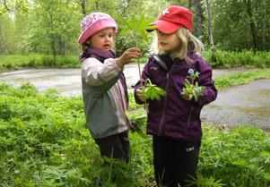 Vackra vårbuketter blev det när Mira Johansen-Melin och Elsa Carli letade blommor.