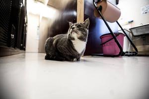 Katt på katthemmet i Borlänge förra året.