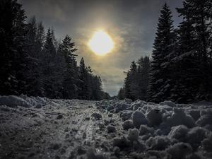April: Vårmorgon vid Jänsmässbränna.