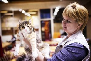 Domaren Jaana Jyrklinen från Finland bedömer katten Theyla. Hon är bara 7 månader och det här är första utställningen.    – Hon hade bra pälskvalité för sin ålder och bra benstomme men hon behöver lite mer tid att utveckla sig, säger ägare Lotta Liljestöm.