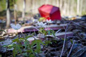 Signaturen Aina B. blir ledsen över sopor i naturen.