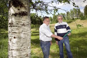 Håkan Rönström (M) och Karl-Olof Tunelid (M) vill bygga badhus bland björkarna nedanför Bromangymnasiet. Fasaden mot sydväst ska bestå av glasfönster och trä som ska sila solljuset mot bassängen likt skogens trädstammar.