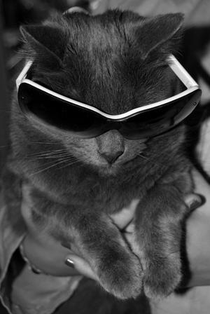 Katten Bamse tycker också det är soligt!