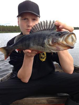 Kalle Matsson i Mora med sin fina abborre han fångat i Venjansjön. Den vägde 1 250 gram.