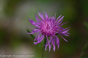 Även den mest oansenliga lilla växt kan ha en otrolig skönhet.