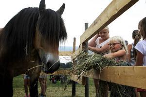Hillevi Fritjof Winberg är en av många som matar hästar på husdjursdagen i Alsen