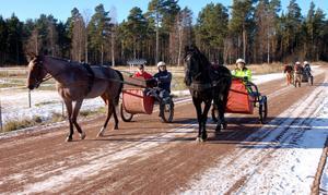 Så här såg det ut då Orsatravarna arrangerade hästens dag i lördags.