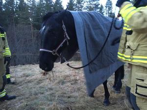 Åtta personer var med och drog upp hästen.