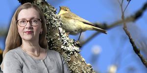 Fågeln på bilden är en lövsångare.