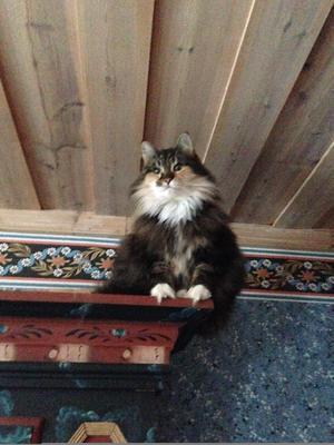 481) Mystra är en gosig katt med egna ideer. Hon har nya favoritställen hela tiden. Hon gillar att ha bra utsikt. Foto: Christina Hägg Larsson