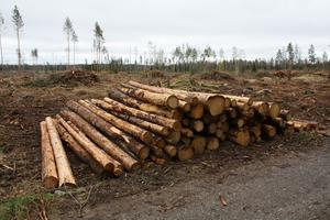 Svea skog har lagt torrakor i en särskild hög för sig vid Svanårålken.  Foto: Insändarskribenten