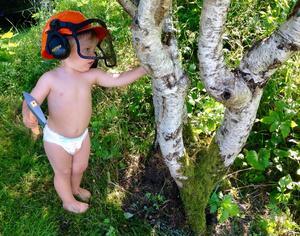 Med rätt utrustning går det lätt att hugga ned farfars träd, tycker Carl. Foto: Rolf Hammarberg