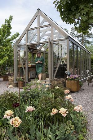 Det nya växthuset är högt och stort. Utanför blommar tulpanerna i typiska Årstidens bästa-färger.