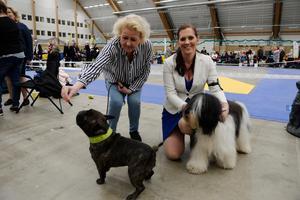 Helena Falgren med franska bulldogen Hjalmar och Therese Lind med sin polski owczarek nizinny som heter Holly.
