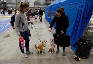 Emelie Karlsson och Emma Ögren Johansson hade rest från Umeå och Örnsköldsvik med sina hundar Asuna och Toby.