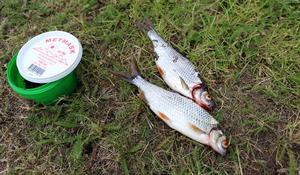 Små fiskar räknas också. Särskilt när det inte nappade överdrivet mycket i kanalvattnet.