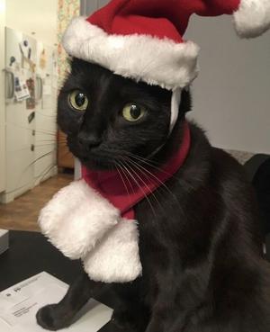 1. Detta är Zim. Han älskar julen. Foto: Tobias Ahlin