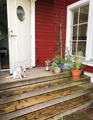 Välkommen hem till mig, hälsar Whoopie. Foto: Lena Osseen-Nordberg