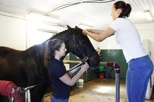 En del i tävlingen är också grooming och lagen kommer att göra sitt bästa för att göra en häst så fin som möjligt på en timme.