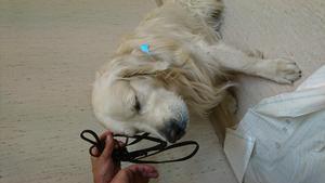 Turbo mådde rejält dåligt när han var på djursjukhuset.