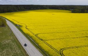 Jordbruket är centralt för att bevara Sveriges öppna landskap, skriver artikelförfattarna. Foto: Fredrik Sandberg / TT.