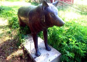 En varg på grönbete, snart mitt i samhället.Foto: Privat
