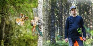 Skogsägaren från Vallsta fick ett avverkningsförbud redan år 2016, som han valde att ta till domstol. Även då fick han rätt. Bilden är ett montage.
