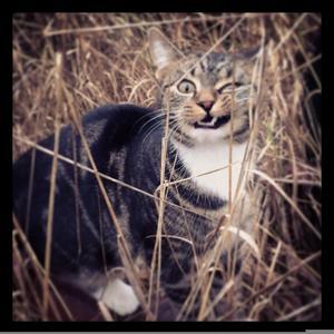 504) Här är PÄRLAN - den vassaste katten vi vet! Foto: Gun Söderberg