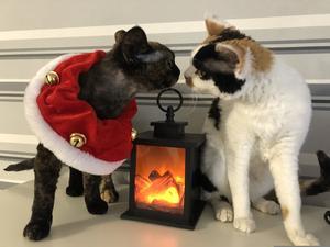 14) Pim och Roxy ger varandra en liten julpuss vid brasan. Foto: Linda Bäcklin
