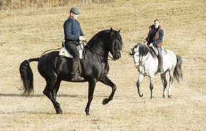Paret strävar efter att skola sina hästar till att lyfta sin rygg mot ryttaren, så de kan bära och balansera ekipaget med sina bakben och att vara lika passionerade i sin uppgift som sin ryttare.