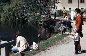 Fisketävling i Svartån vid Slussen, 1980. Fotograf:Gunlög Enhörning
