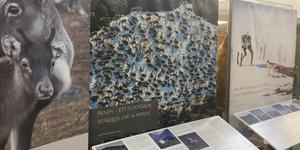 Renen i världen, utställning i Medborgarhuset.