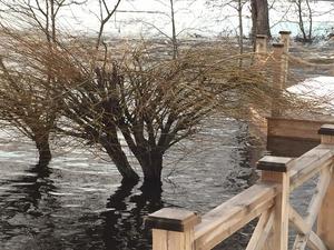 Träden på gräsmattan står nu i meterhögt vatten. Bild: Privat