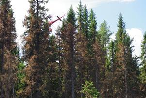 Delar av den äldre skogen vid Grötingsberget brann även uppe i topparna, inte minst granskogen. I det här fallet har helikoptrar precis släckt en brand som snabbt gick upp i trädkronorna nära brandgaten, och samtidigt duschat en DN-reporter som klivit ut i den brända skogen.