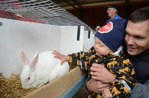 Daniel Ölander och sonen Elton klappade gärna kaninerna. I bakgrunden Rune Olsson från Gävleborgs läns kaninförening.