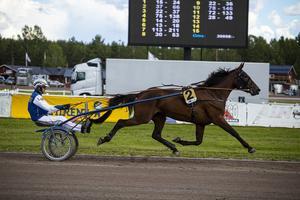 Leif Witasp med hästen Massaj Käll, en treårig valack.