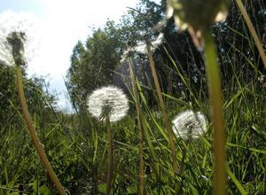 Stugsundsudden skulle kunna vara ett vackert strövområde om det sköttes, skriver insändaren.