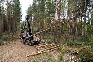 Kontinuitetsskogsbruk i Rättvik. Foto: Hans Bloom