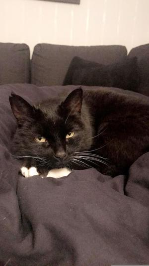 201) Katten Affe Foto: Emma Perssln
