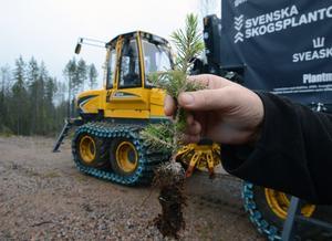 Ungefär 2000 plantor i timmen klarar maskinen.