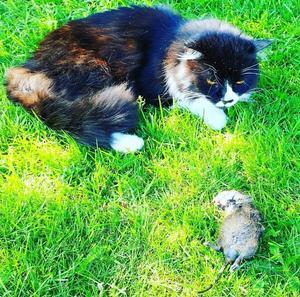Både Svullo och Pucko gillade att jaga råttor och möss.